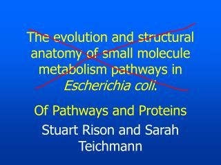 The evolution and structural anatomy of small molecule metabolism pathways in  Escherichia coli .
