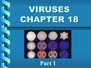 VIRUSES CHAPTER 18