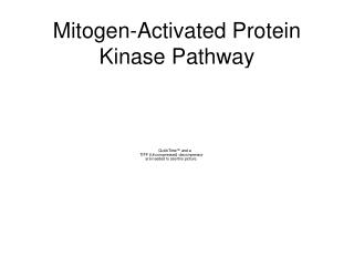Mitogen-Activated Protein Kinase Pathway