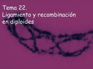 Tema 22.  Ligamiento y recombinación en diploides