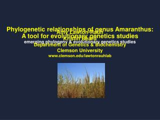 Amy Lawton-Rauh Kristin Beard Department of Genetics & Biochemistry Clemson University