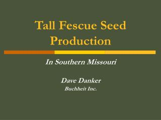 Tall Fescue Seed Production