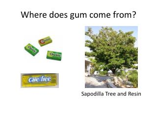 Where does gum come from?