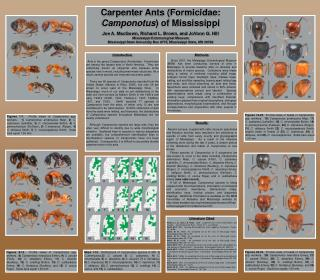 Carpenter Ants (Formicidae:  Camponotus ) of Mississippi