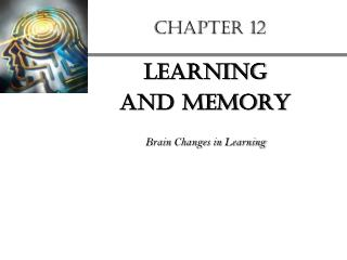 Learning  and Memory  Brain Changes in Learning