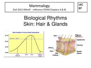 Biological Rhythms  Skin: Hair & Glands