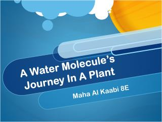 A Water Molecule's Journey In A Plant