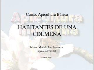 Curso: Apicultura B sica  HABITANTES DE UNA COLMENA