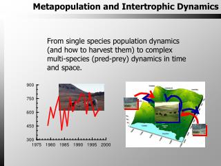 Metapopulation and Intertrophic Dynamics