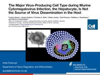 Antje Ksienzyk Department of Gene Regulation and Differentiation aks08@helmholtz-hzi.de