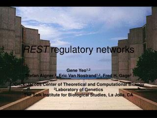 REST  regulatory networks