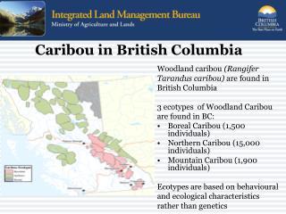 Caribou in British Columbia