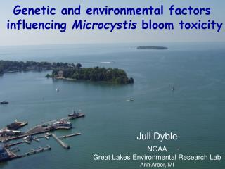 Genetic and environmental factors  influencing  Microcystis  bloom toxicity