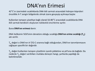 DNA'nın Erimesi
