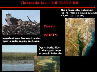 Chesapeake Bay: – THE DEAD ZONE