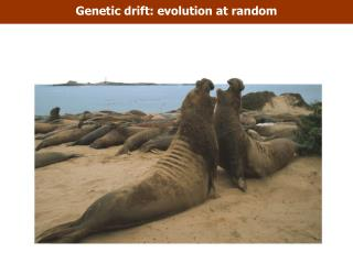 Genetic drift: evolution at random