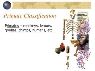 Primate Classification