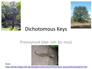 Dichotomous Keys