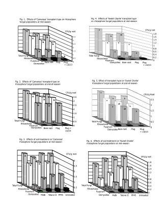 Fig. 1.  Effects of 'Camarosa' transplant type on rhizosphere fungal populations at mid-season