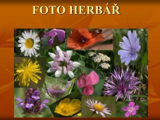 FOTO HERB�?