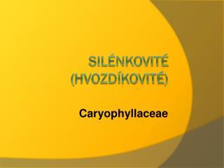 Silénkovité  ( hvozdíkovité )