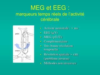 MEG et EEG :  marqueurs temps réels de l'activité cérébrale