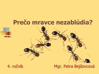 Prečo mravce nezablúdia?