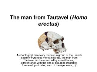 The man from Tautavel ( Homo erectus )