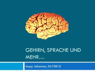 Gehirn, Sprache und mehr…