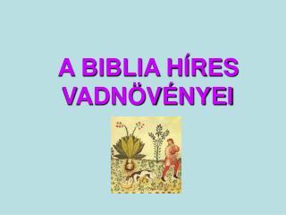 A BIBLIA H RES VADN V NYEI