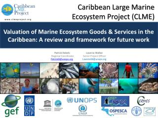 Caribbean Large Marine        Ecosystem Project (CLME)