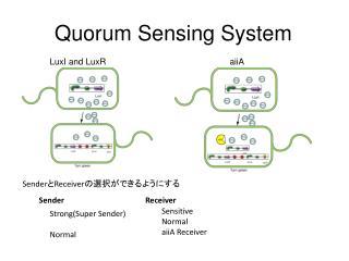 Quorum Sensing System