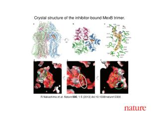 R Nakashima  et al. Nature  000 , 1-5 (2013) doi:10.1038/nature12300