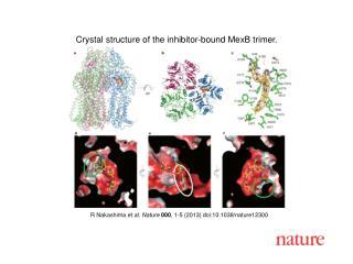 R Nakashima  et al. Nature  000 , 1-5 (2013) doi:10.1038/nature12300
