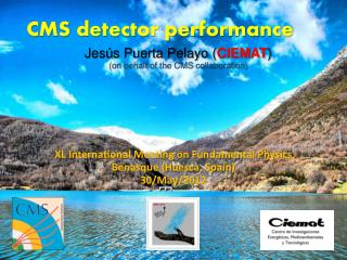 CMS detector performance