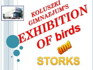 KOLUSZKI GIMNAZJUM 'S EXHIBITION OF  birds
