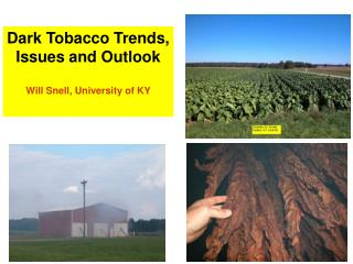 Dark Tobacco Trends, Issues and Outlook Will Snell, University of KY