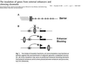 """Ejemplo de un """"insulator"""" con efecto barrera  y bloqueador de enhancer"""