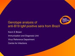 Genotype analysis of  anti-B19 IgM positive sera from Brazil
