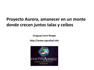 Proyecto Aurora, amanecer en un monte donde crecen juntos talas y ceibos