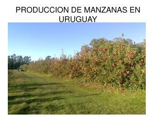PRODUCCION DE MANZANAS EN URUGUAY
