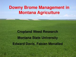 Downy Brome Management in Montana Agriculture