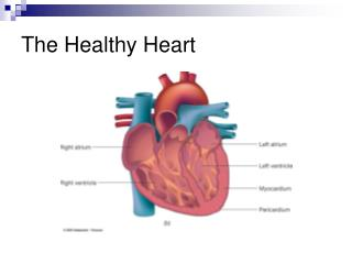 The Healthy Heart