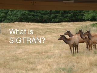What is SIGTRAN?