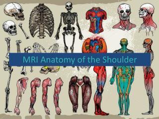 MRI Anatomy of the Shoulder
