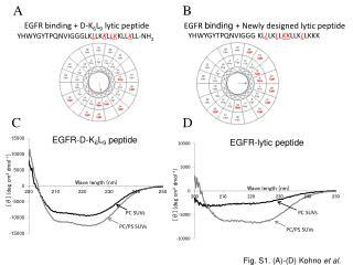 EGFR binding + D-K 6 L 9  lytic peptide