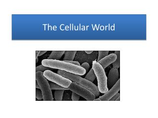 The Cellular World