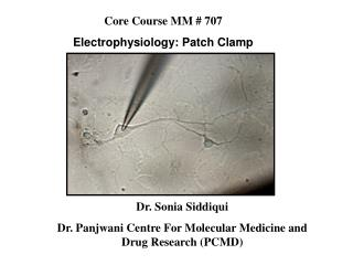 Dr. Sonia Siddiqui Dr. Panjwani Centre For Molecular Medicine and Drug Research (PCMD)