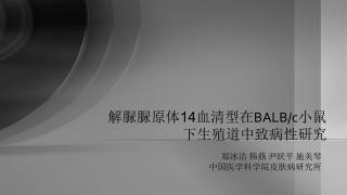 解脲脲原体 14 血清型在 BALB/c 小鼠 下生殖道中致病性研究