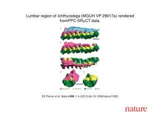 SE Pierce  et al. Nature  000 , 1-4 (2013) doi:10.1038/nature11825